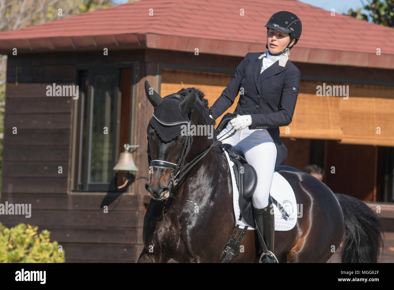 Irina Zakhrabekova & Quadroneur - Deutsches Reitpferd. Dressage Stock Photo
