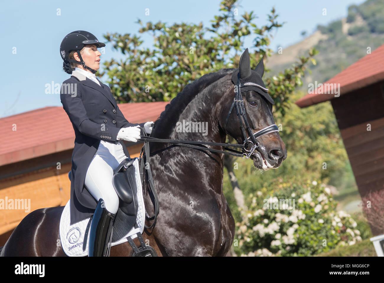 Irina Zakhrabekova & Quadroneur - Deutsches Reitpferd. Dressage - Stock Image