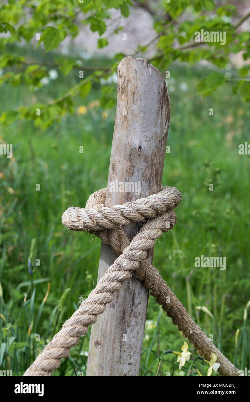 Close up of hemp rope tied round a wooden stake in an garden - Stock Image