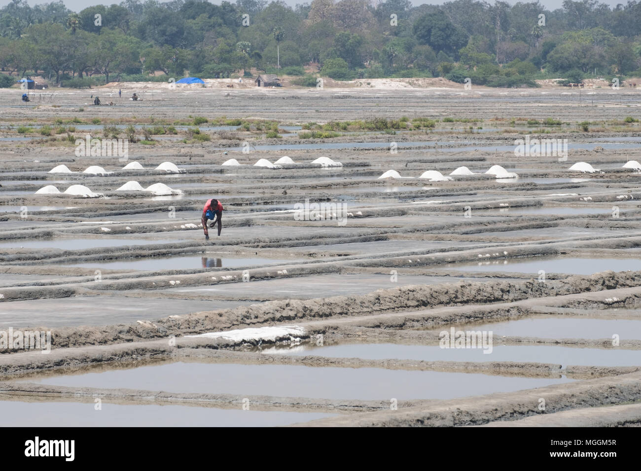 Villuppuram, India - March 18, 2018: Worker on the salt flats in the north of Tamil Nadu. The salt is separated in the pits and dried in small heaps - Stock Image