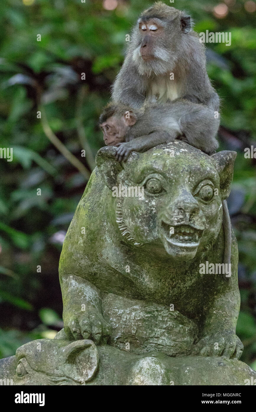 Mother and baby monkey perched atop statue, Sacred Monkey Forest Sanctuary, Ubud, Bali, Indonesia - Stock Image