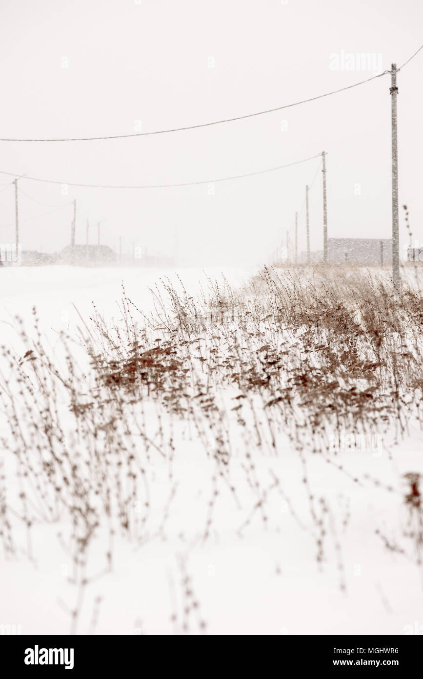 Winter blizzard at the side of a road with weeds and distant power lines and snow covered houses on the roadside Stock Photo