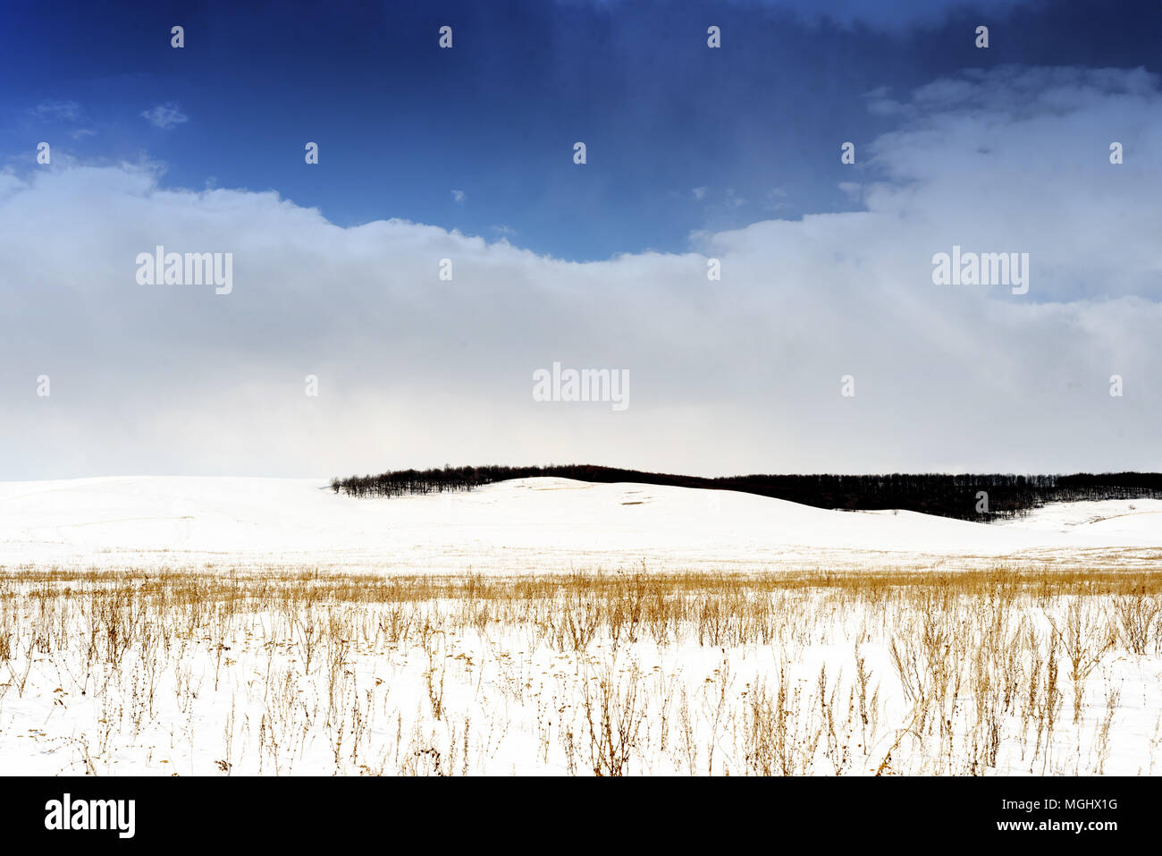 Winter snowscape of wild fields with weeds and large snow clouds and areas of blue sky with nobody in the wintry themed scene and landscape. Large for Stock Photo