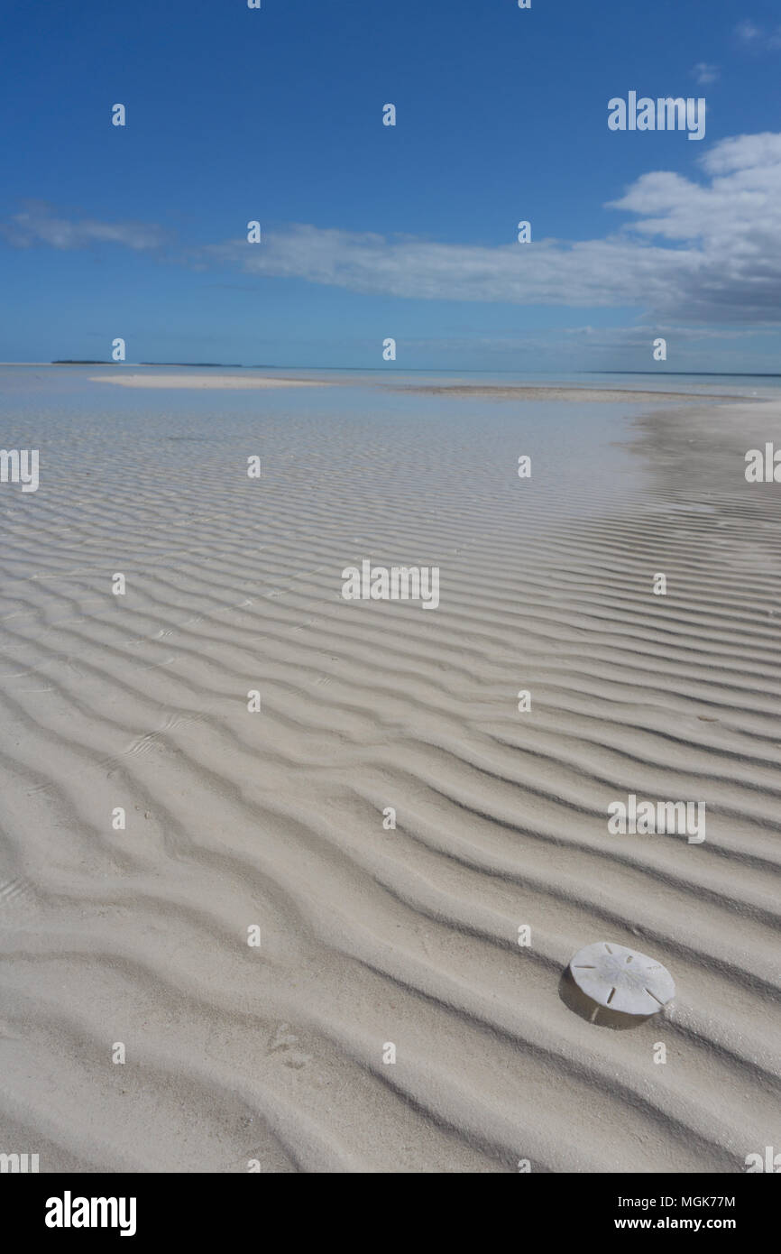 A bright white sand dollar shell sits on rippled sand shaped by waves in the Sea of Abaco Stock Photo