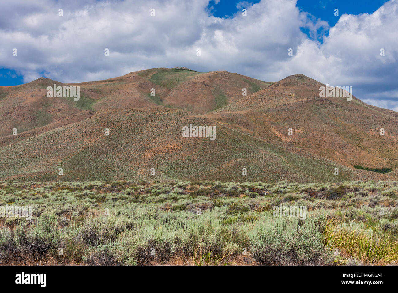 Sage and grass fields on the Snake River Plains in Idaho. The country is rugged, remote, and harsh both in winter and summer. - Stock Image