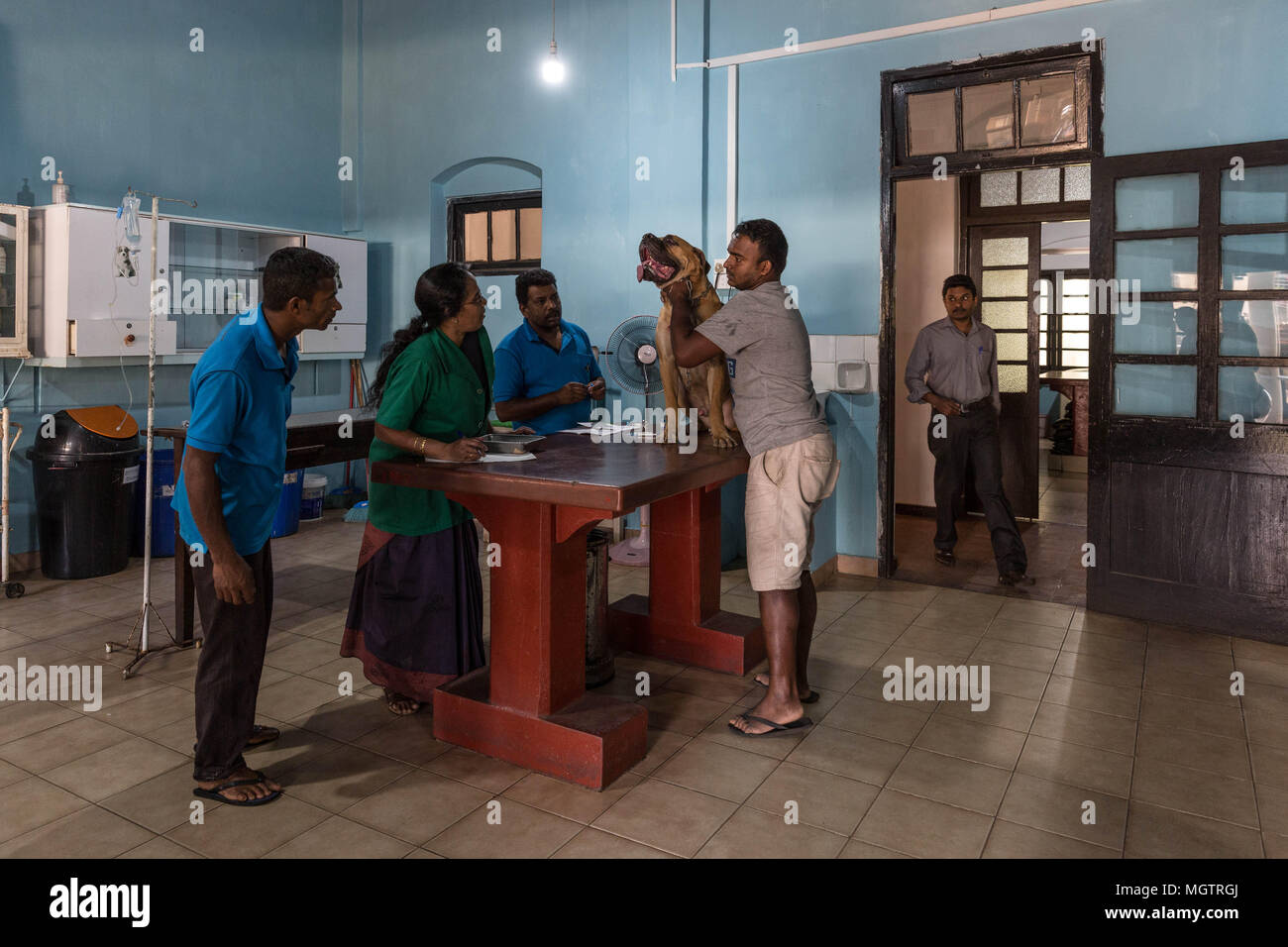Kandy, Sri Lanka. 18th Feb, 2018. DR. MANOHARI examines one of her four-legged patients at the Government Veterinary Hospital clinic in the Peradeniya region of Kandy, Sri Lanka, on Sunday, February 18, 2018.MANOHARI, a Hindu, married in 1991. She started her veterinary practice in 1992 while she was pregnant. She started working at this hospital in 1993.She and her husband, a Muslim, have two sons and a daughter. Her sons are currently studying for higher degrees in the United States and Nepal.MANOHARI looks after her 86-year-old mother who is experiencing dementia. (Credit Image: © - Stock Image