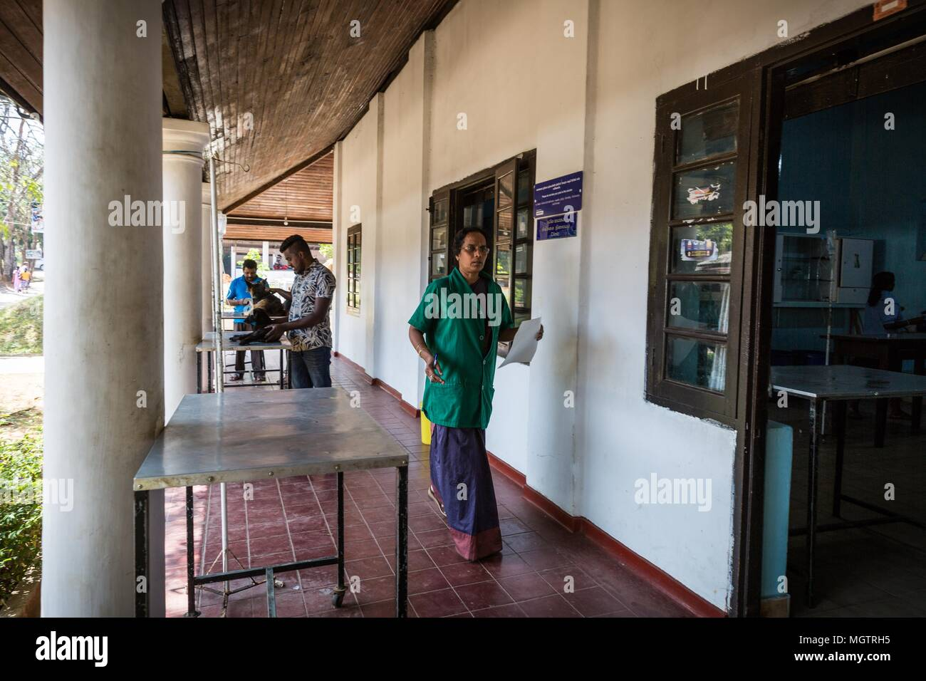 Dr. 18th Feb, 2018. MANOHARI moves between her four-legged patients at the Government Veterinary Hospital clinic in the Peradeniya region of Kandy, Sri Lanka, on Sunday, February 18, 2018.MANOHARI, a Hindu, married in 1991. She started her veterinary practice in 1992 while she was pregnant. She started working at this hospital in 1993.She and her husband, a Muslim, have two sons and a daughter. Her sons are currently studying for higher degrees in the United States and Nepal.MANOHARI looks after her 86-year-old mother who is experiencing dementia. (Credit Image: © Tracy Barbutes via Z - Stock Image
