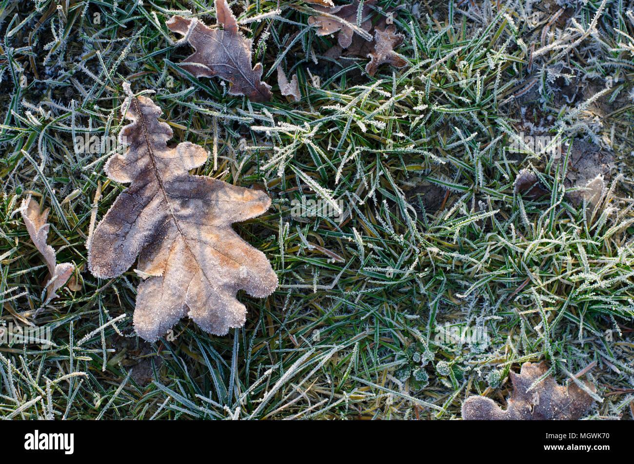 frozen leaf on frostbitten grass in winter Stock Photo