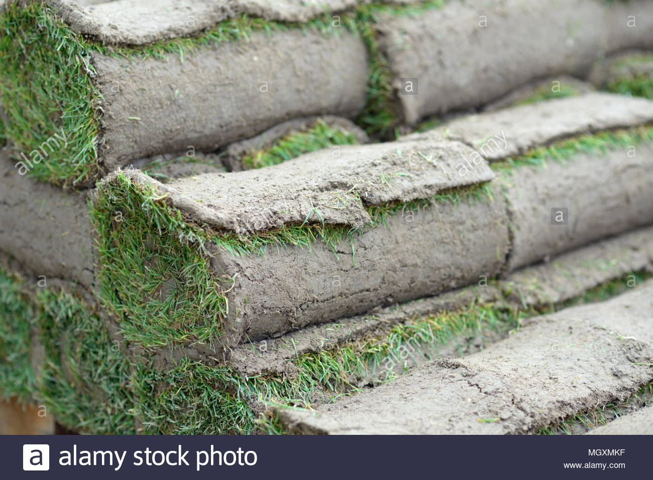 Stack of rolled up turfs - Stock Image