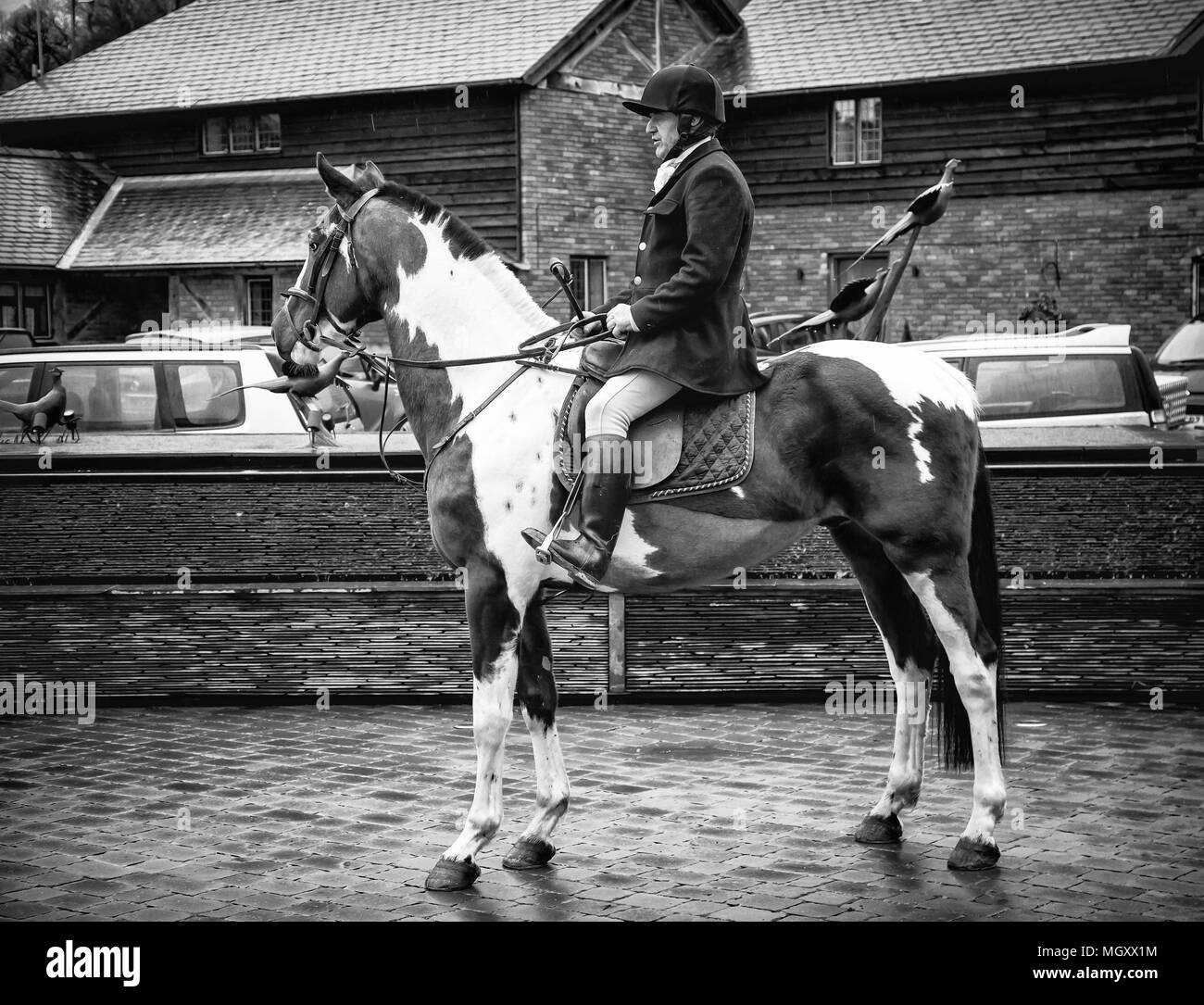 people riding horses - Stock Image