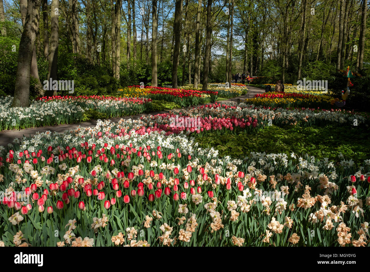 Floral spectacle in the largest garden in the world, the Keukenhof park. - Stock Image