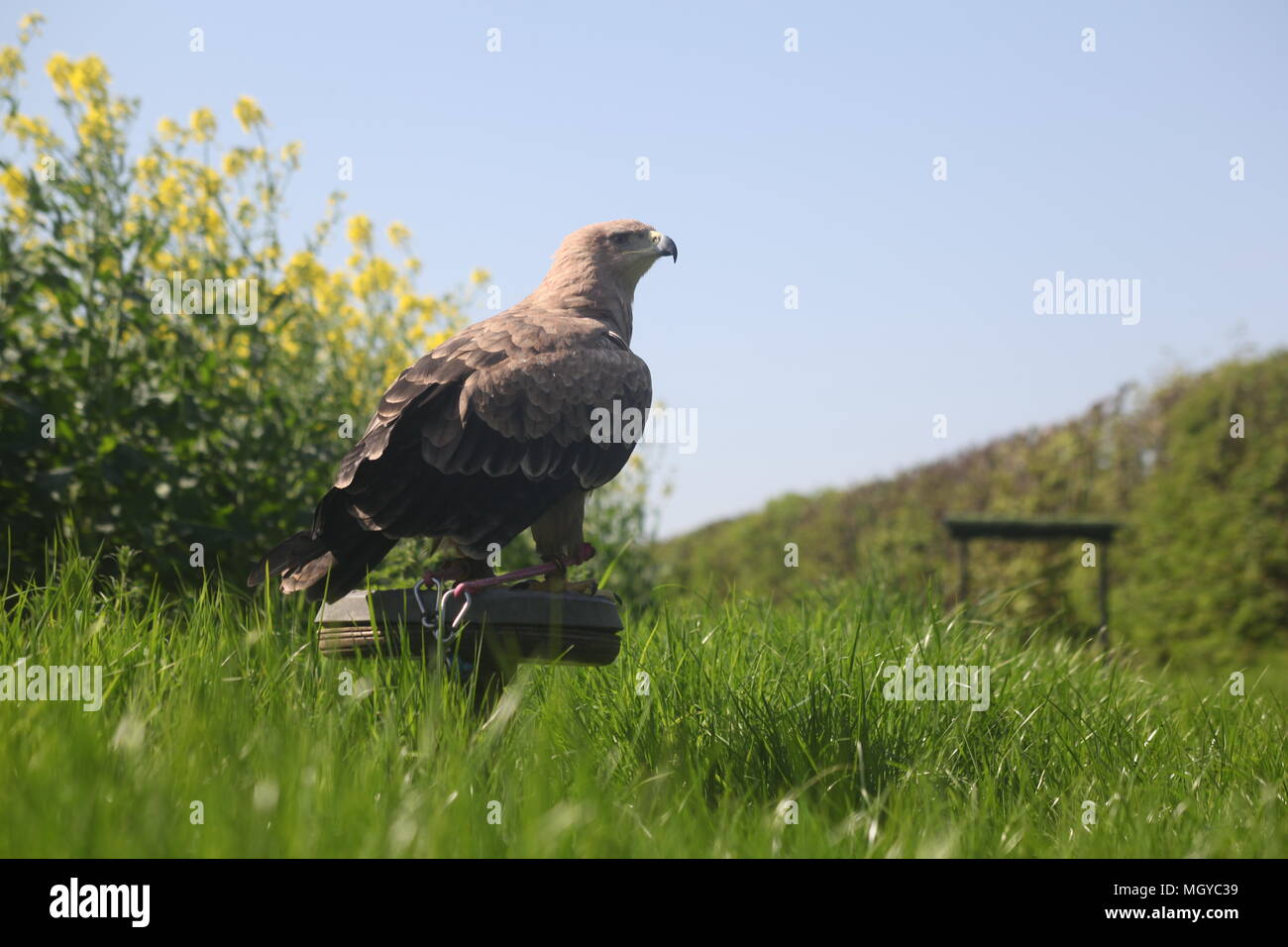 Taking Photos Of Birds Of Prey Is My Hobby Stock Photo
