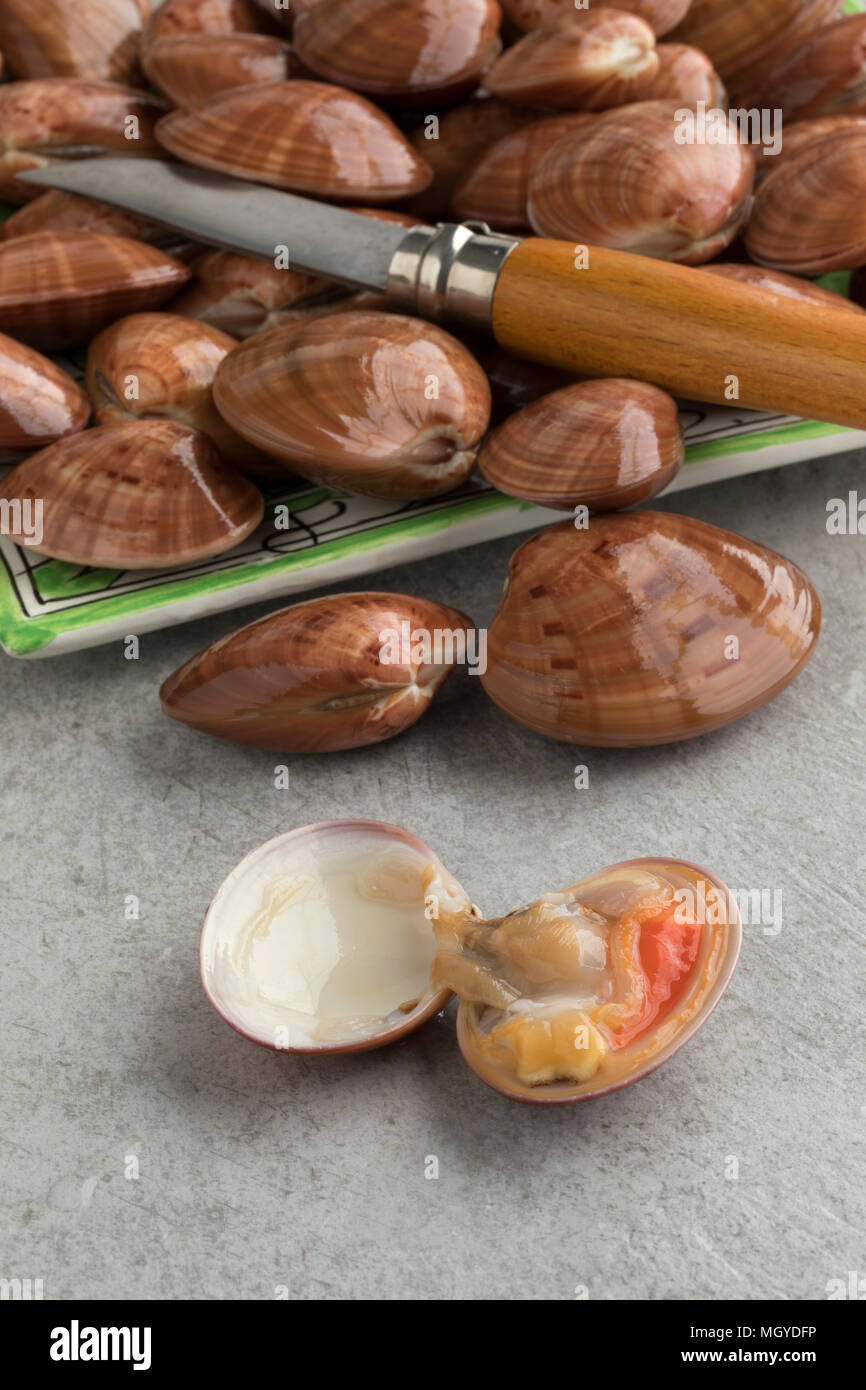 Fresh raw closed smooth clams or Callista Chione and one opened in front - Stock Image