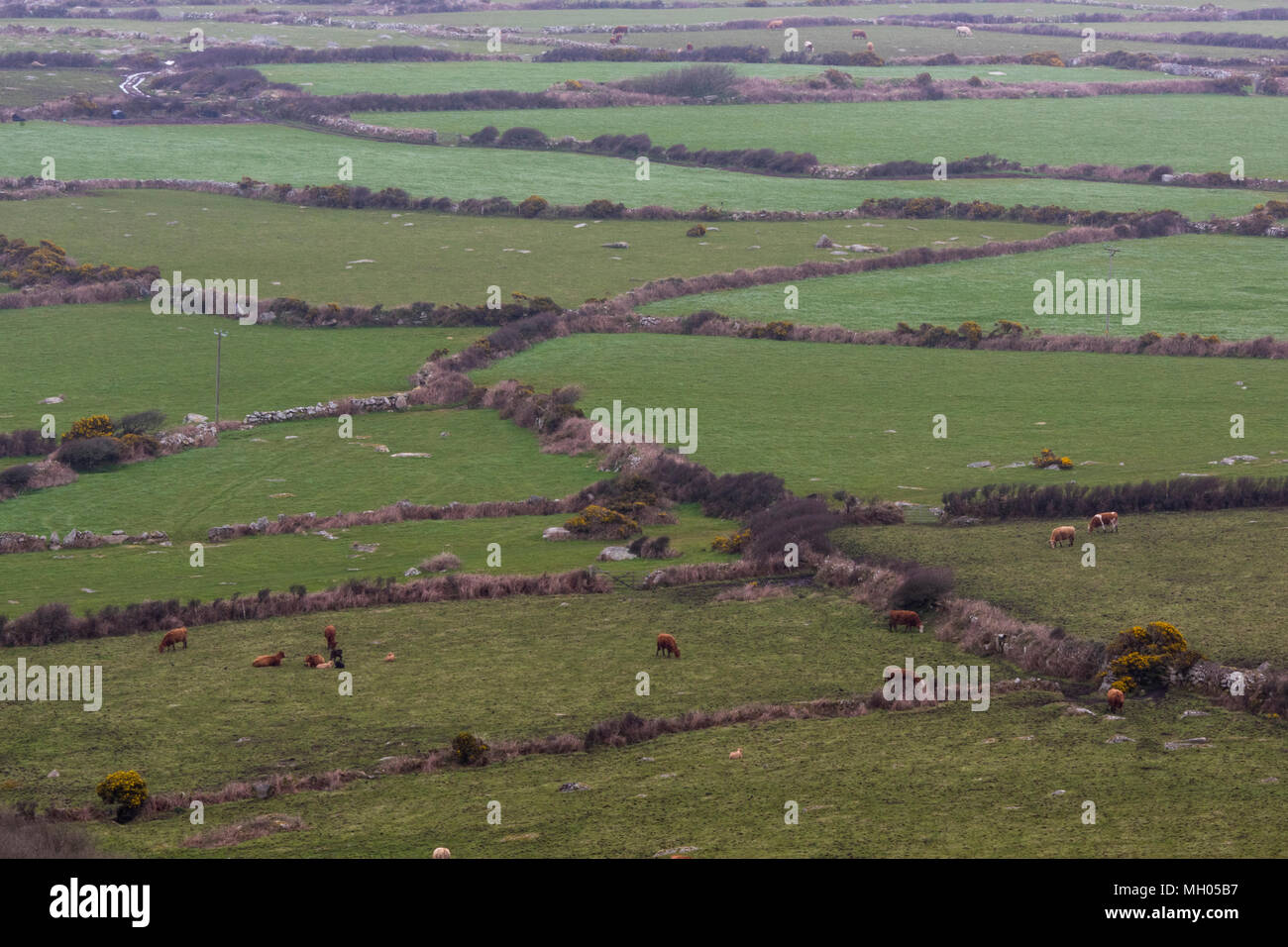 A field system in use with stone dry stone walling in the countryside on the Cornish cost in cornwall. Fields and countryside management by farmers. - Stock Image
