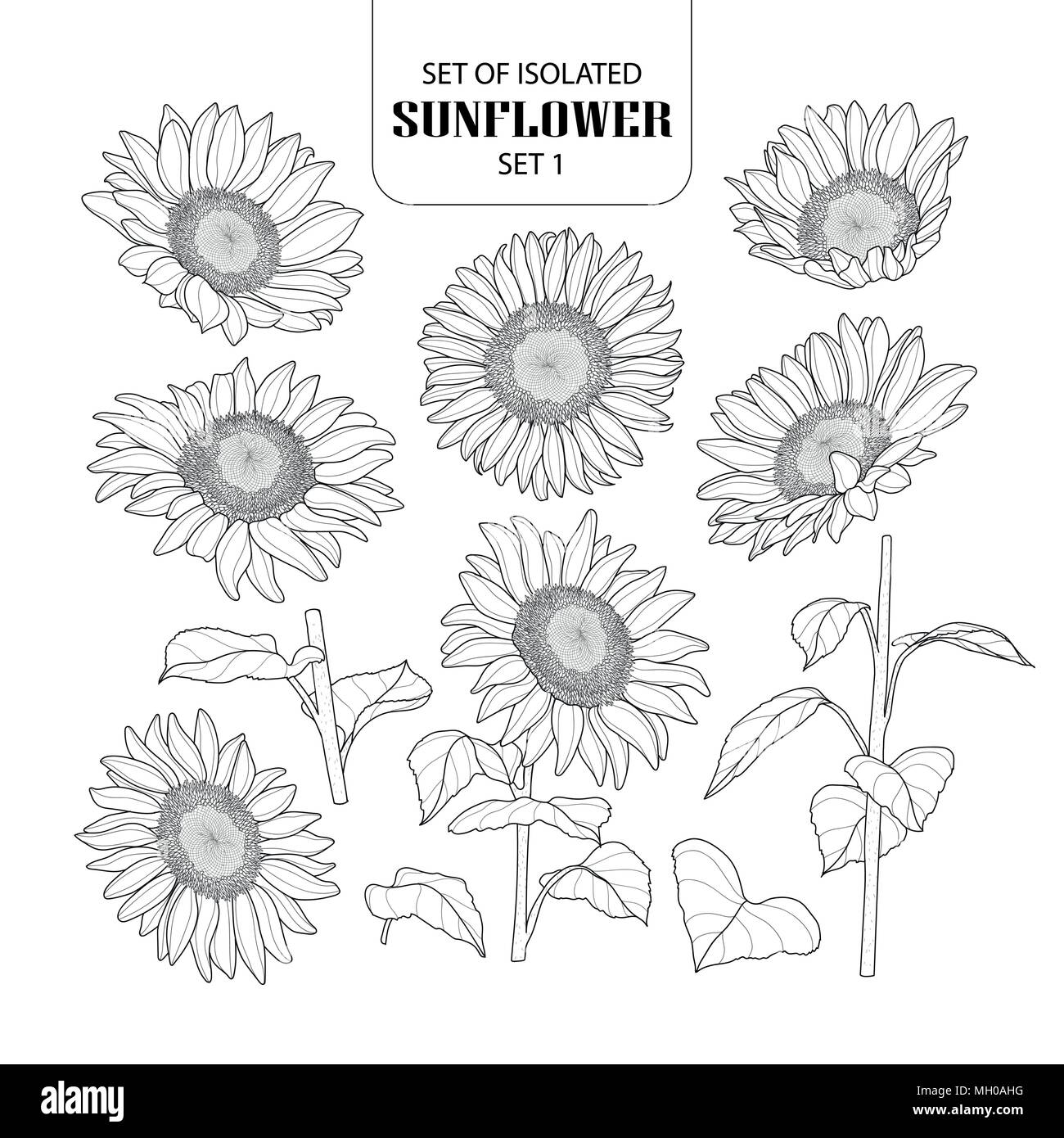 Set Of Isolated Sunflower Set 1 Cute Hand Drawn Vector Illustration In Black Outline And White Plane On White Background Stock Vector Image Art Alamy Here presented 40+ sunflower outline drawing images for free to download, print or share. https www alamy com set of isolated sunflower set 1 cute hand drawn vector illustration in black outline and white plane on white background image182561164 html