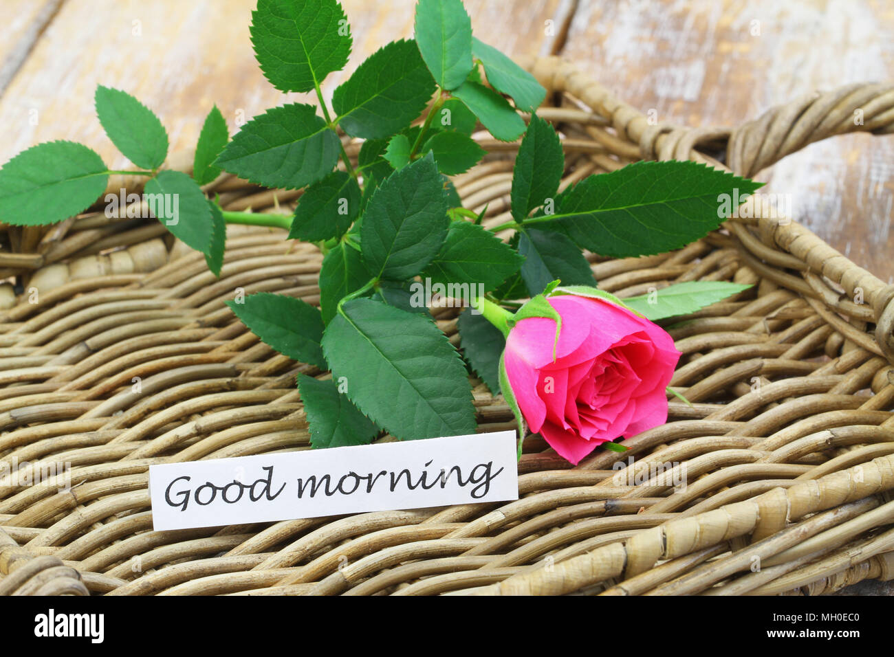 Good Morning Note With Rose Stock Photos Good Morning Note With