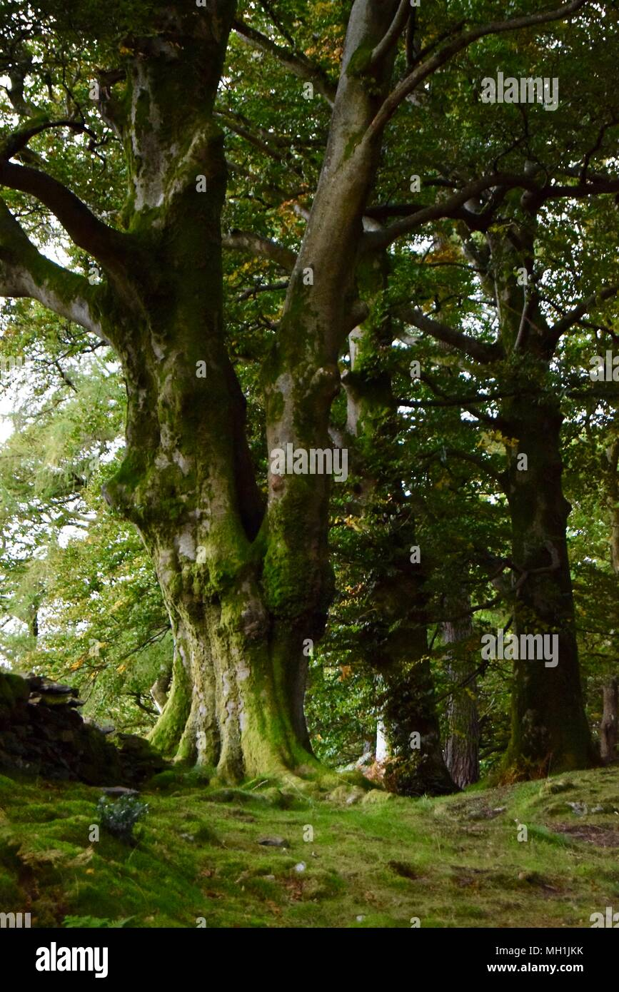 Collection of summer green trees in scenic woodland, snowdonia, north Wales, Great Britain Stock Photo