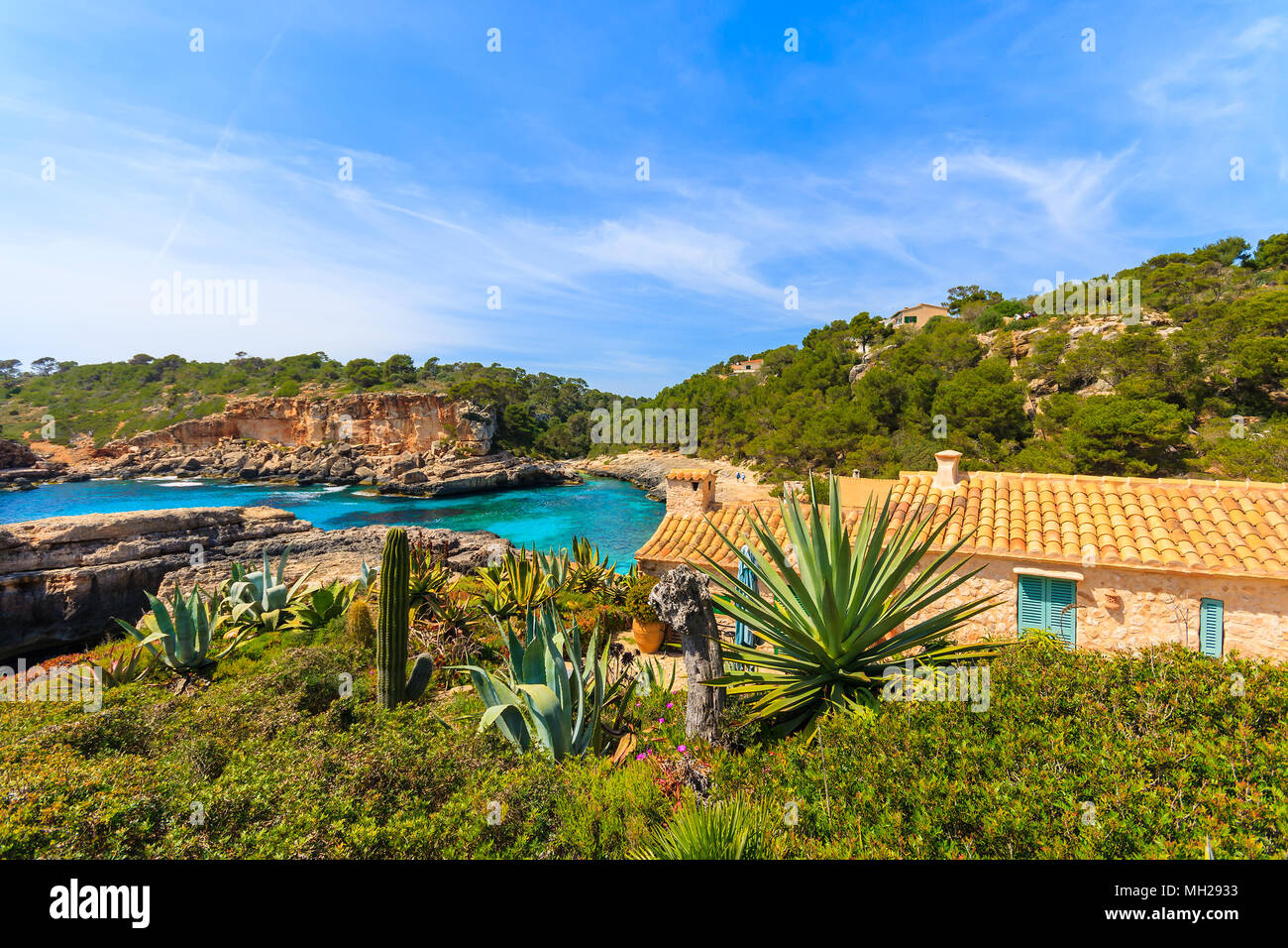 Tropical agave plants growing on rocks in beautiful bay with beach, Cala S'Almunia, Majorca island, Spain - Stock Image