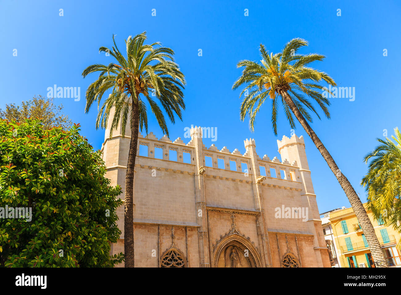 Gate and palm tree of historic building in old town of Palma de Majorca, Spain - Stock Image