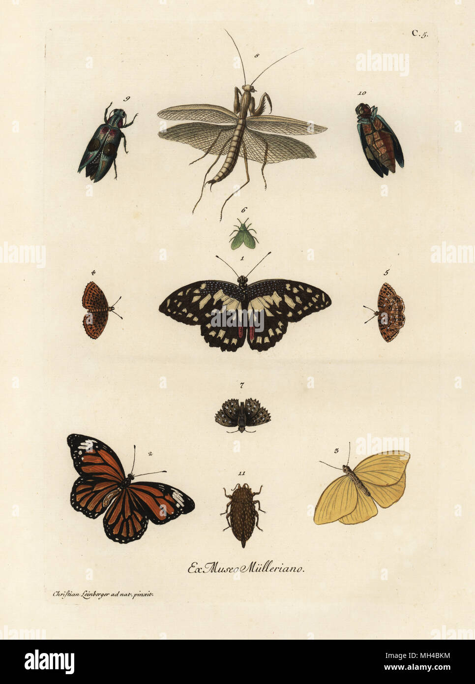 Varieties of butterflies, moths and insects. Handcoloured copperplate engraving after an illustration by Christian Leinberger from Georg Wolfgang Knorr's Deliciae Naturae Selectae of Kabinet van Zeldzaamheden der Natuur, Blusse and Son, Nuremberg, 1771. Specimens from a Wunderkammer or Cabinet of Curiosities owned by P.L. Muller. - Stock Image
