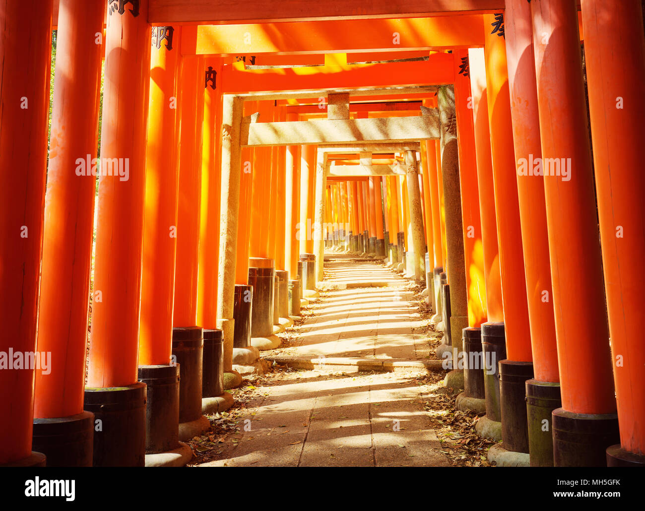View to Torii gates in Fushimi Inari Shrine - Stock Image