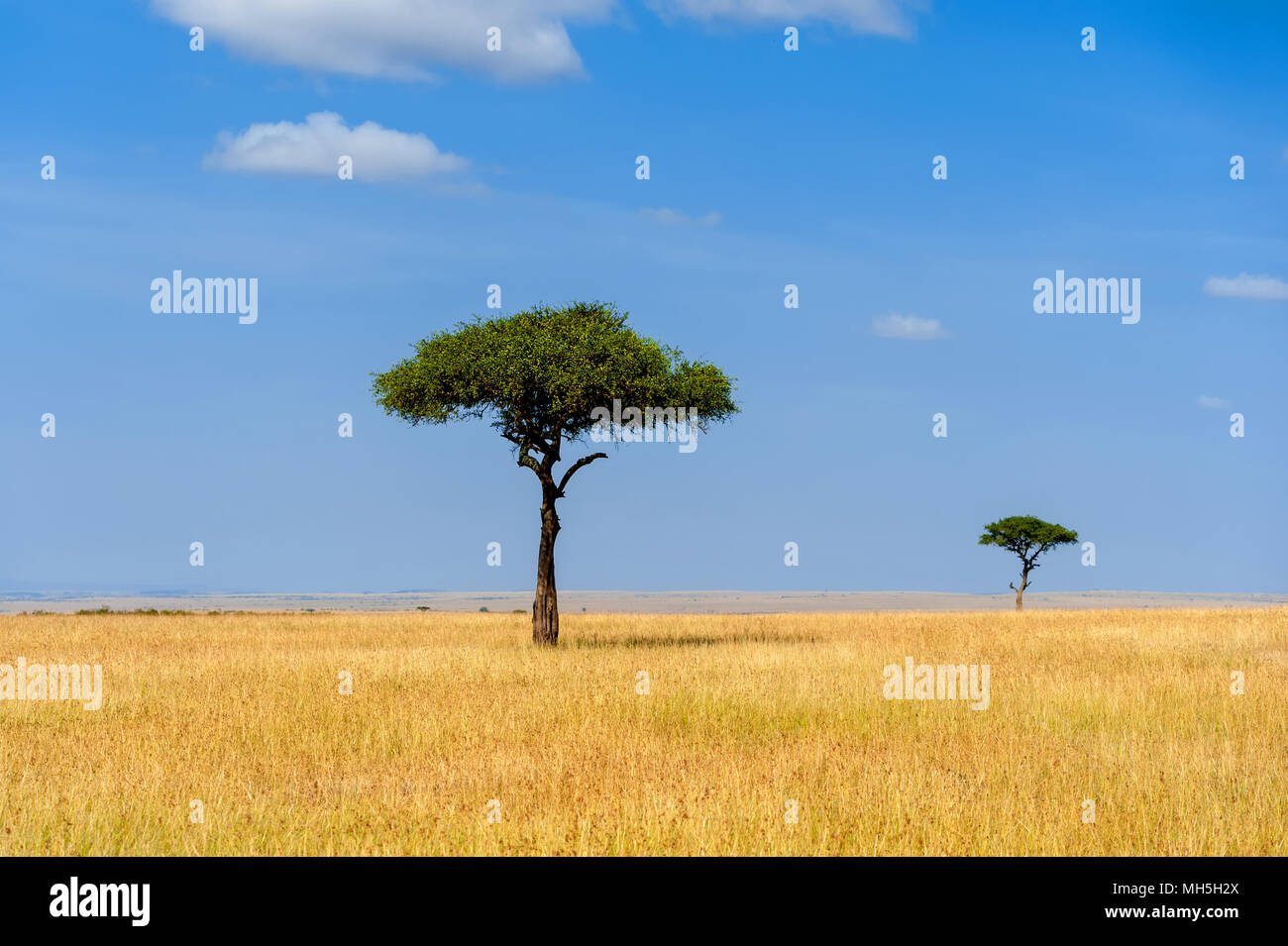 Beautiful landscape with nobody tree in Africa - Stock Image