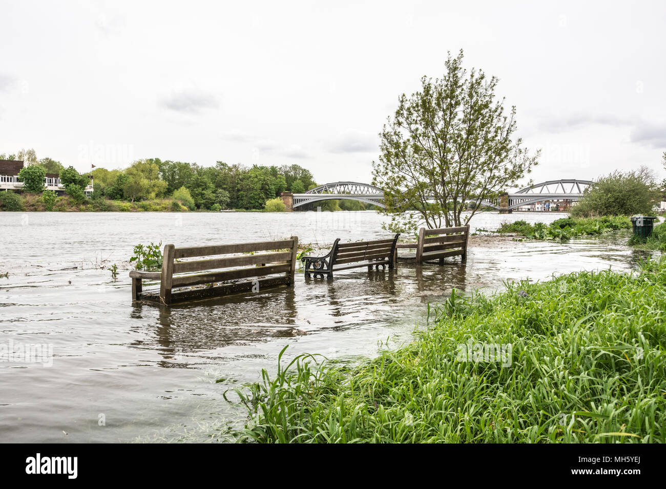 London, England, UK. 30 April, 2018.  Flooding near the former Stag Brewery at Mortlake, London. The Thames Tides website issued a flood alert today for some Thames Riverside properties today. Credit: Benjamin John/Alamy Live News - Stock Image