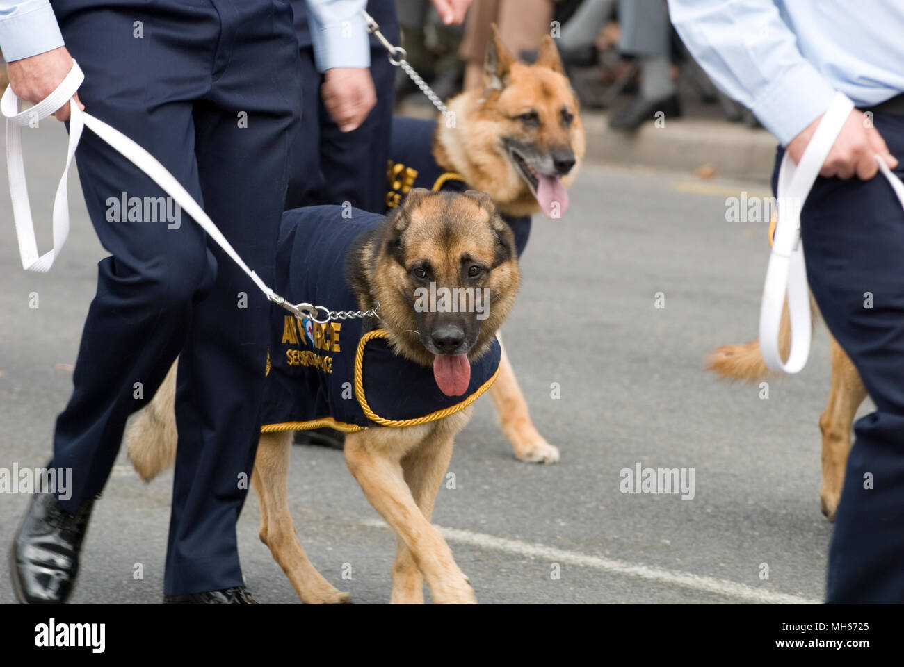 RAAF POLICE DOGS TAKING PART IN ANZAC DAY MARCH 2007, ADELAIDE, SOUTH AUSTRALIA - Stock Image