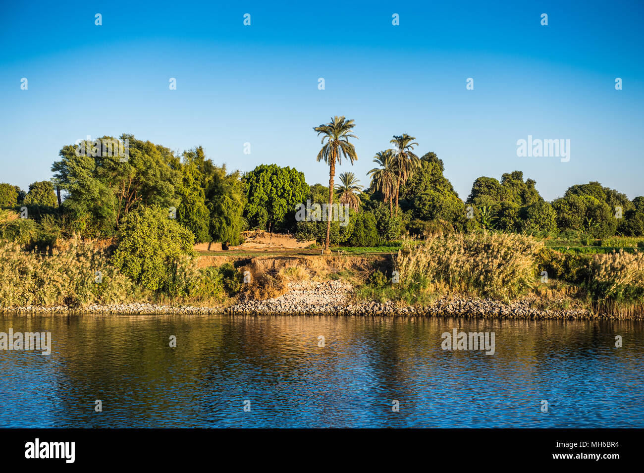Coast and nature on the coast of the Nile rive in Egypt Stock Photo