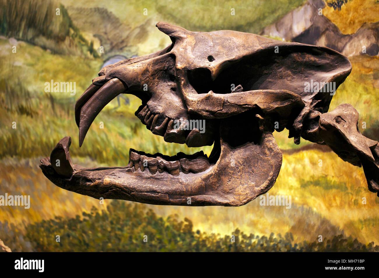 Astrapotherium Magnum - Stock Image
