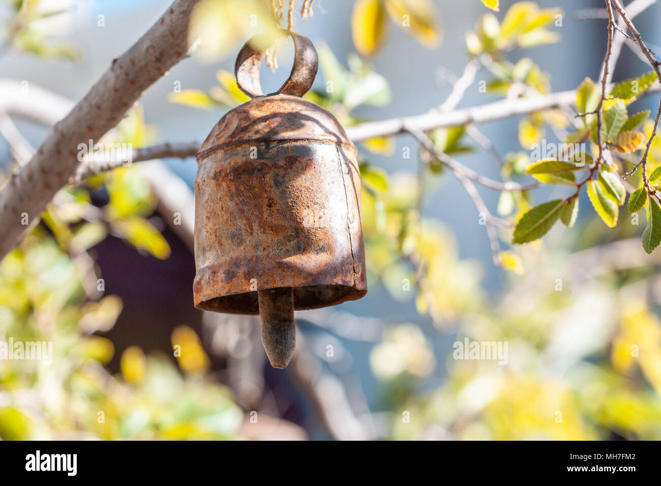 Metal rusty bell hanging from tree branch on blurred background - spirituality concept - Stock Image