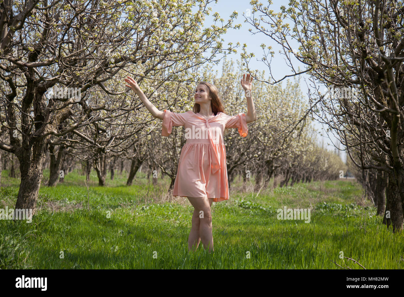 blonde woman in pink dress walks by a blooming garden in spring - Stock Image