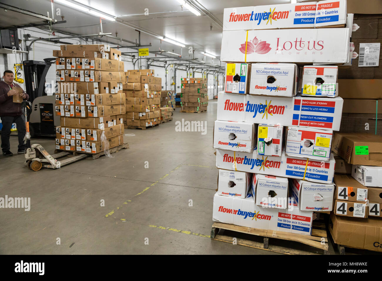 Doral, Florida - Cut flowers from Ecuador stacked in the warehouse at the USA Bouquet company near the Miami airport. Workers at the company package f - Stock Image