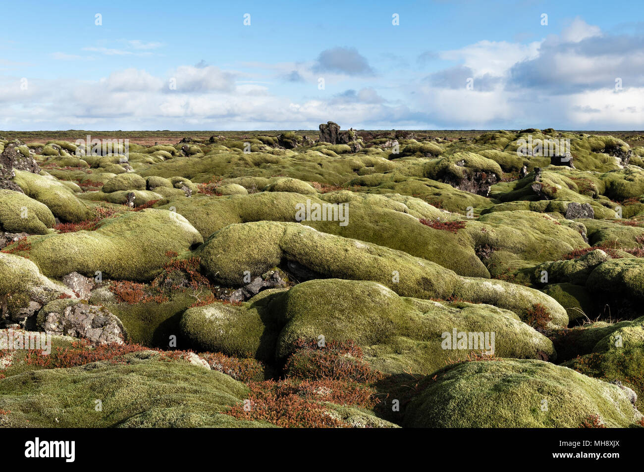 South Iceland. The vast Eldhraun lava field is covered with thick moss. It was created in the devastating eruption of 1784, the largest in history - Stock Image