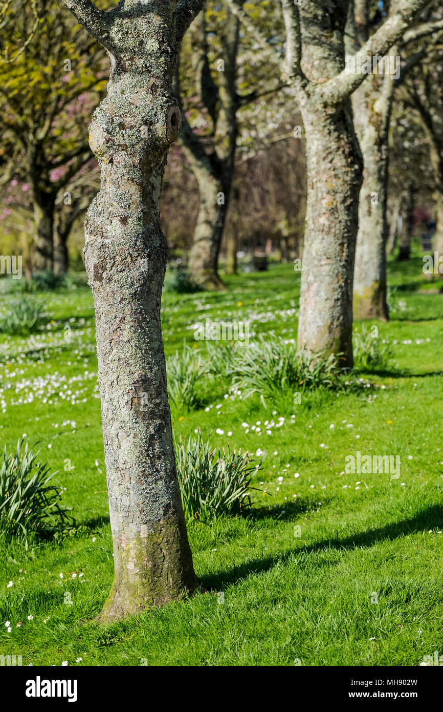 Trees in Trenance Park in Newquay in Cornwall. - Stock Image