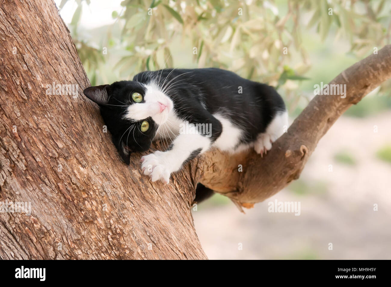 cat fighting game