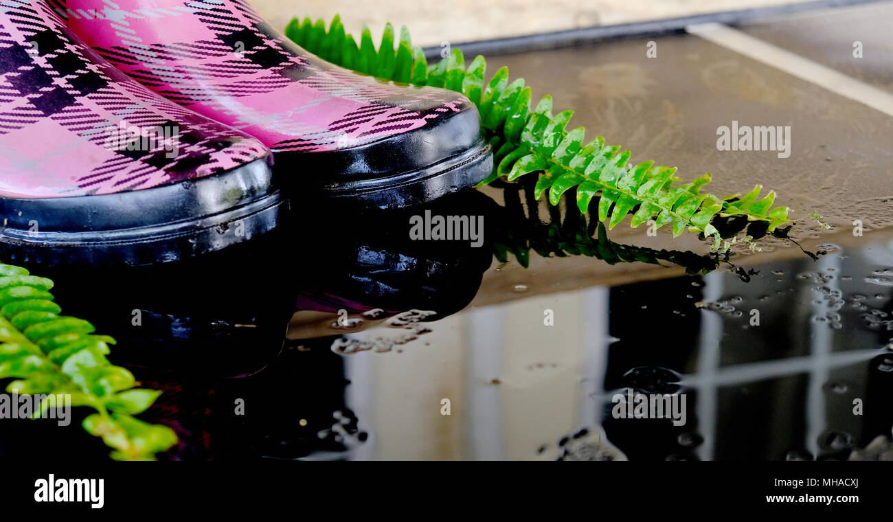 Wet pink plaid rain boots from rainy spring weather, with puddle and reflection. - Stock Image