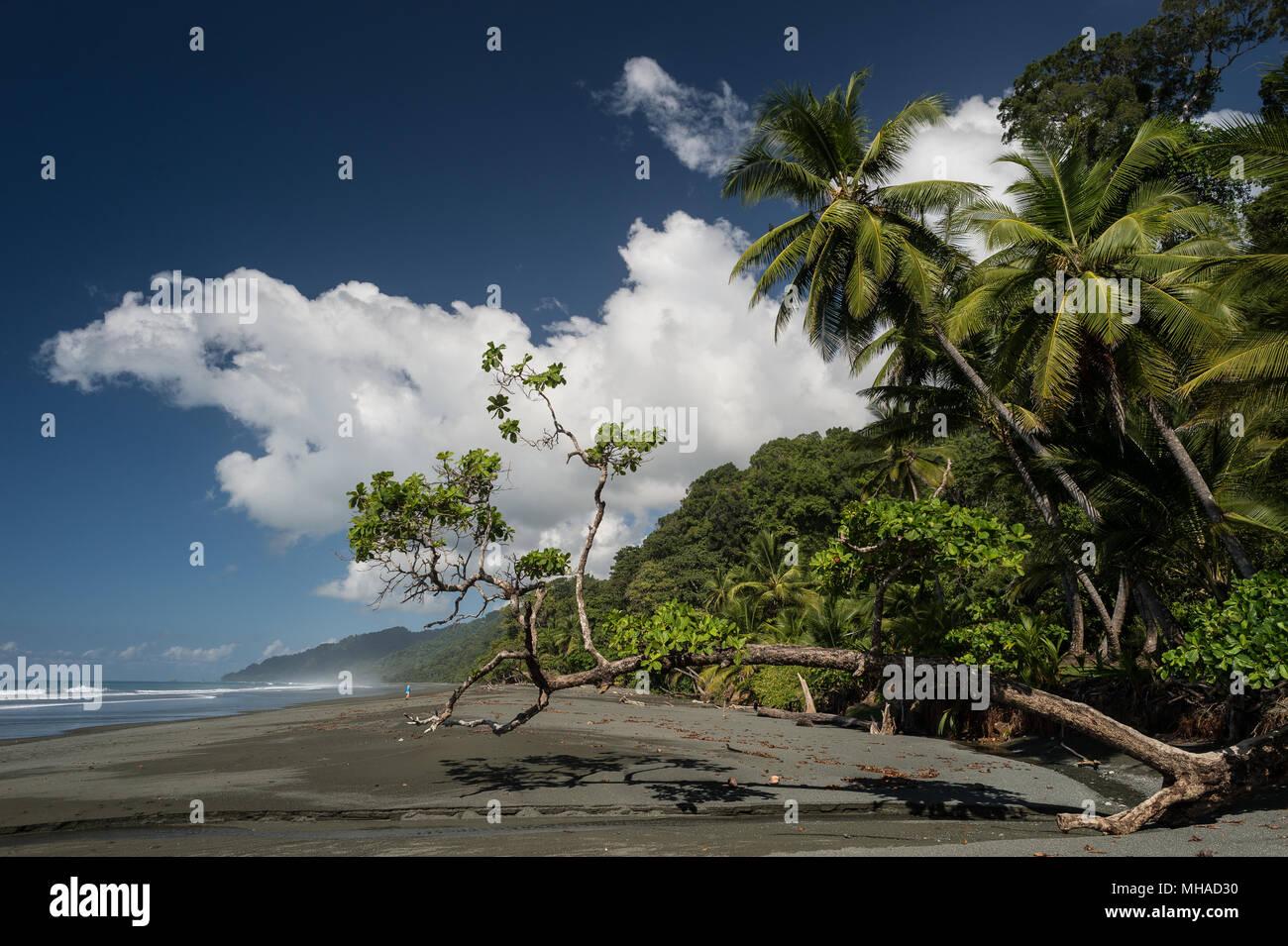 Carate Beach, Corcovado National Park, Costa Rica, Centroamerica - Stock Image