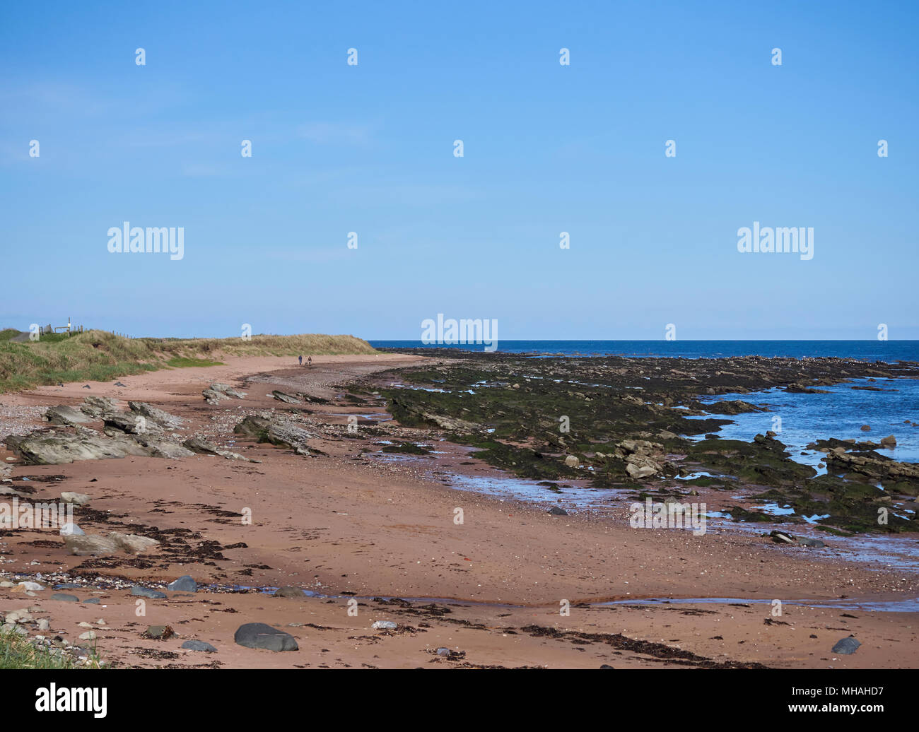 Dog Walkers in the distance on part of the Beach between East Haven and Arbroath, with the tide out and the Rock Strata exposed, Angus, Scotland. Stock Photo
