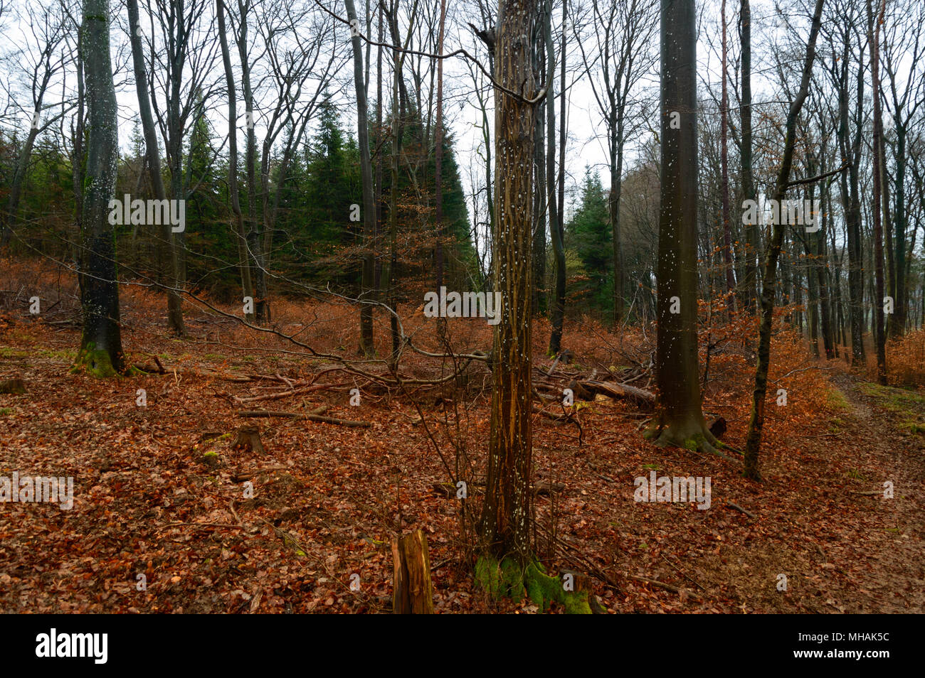 dark winter forest with red leaves on the ground stock photo