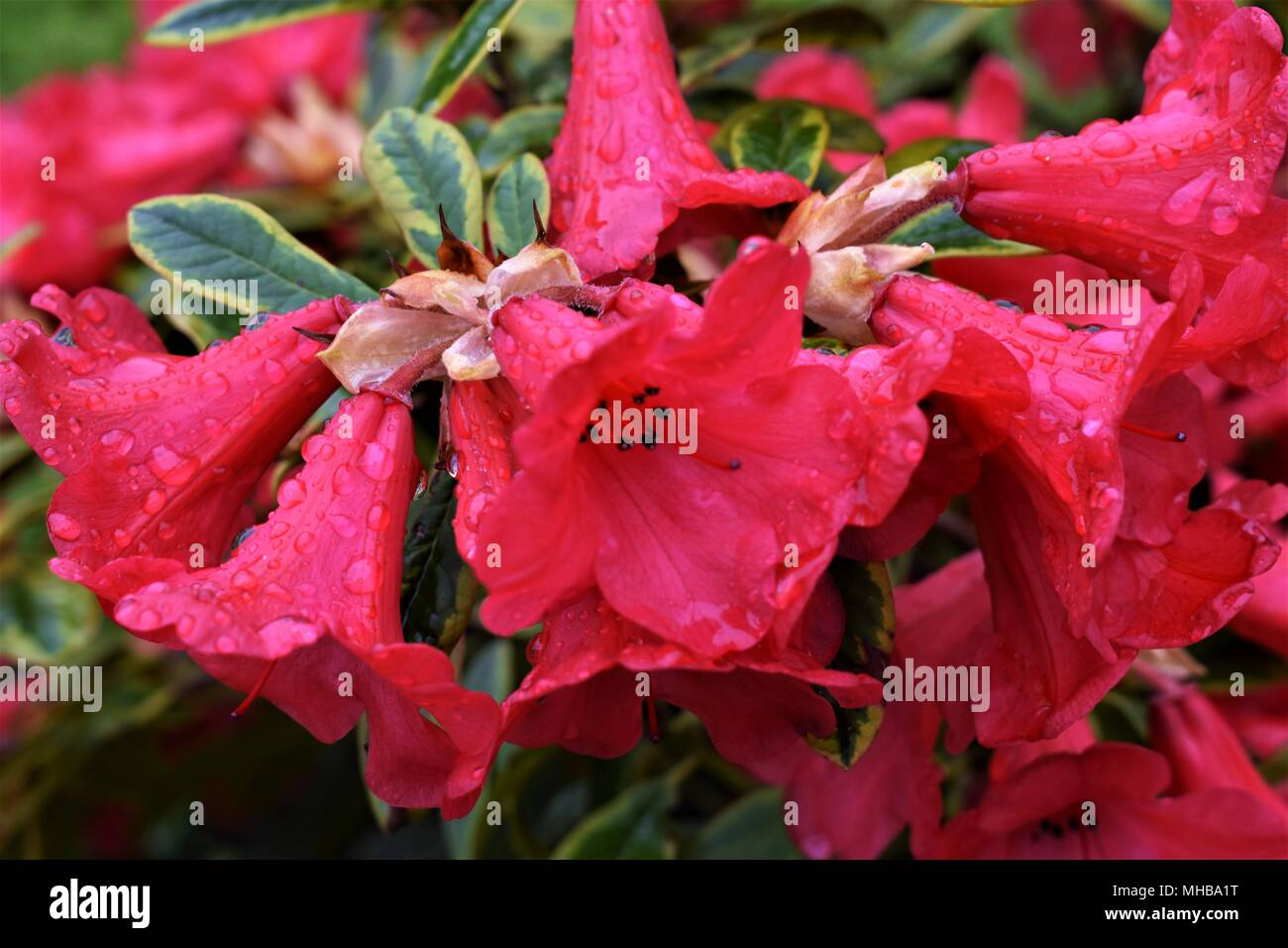 Beautiful hanging basket flowers stock photos beautiful hanging up close and personal with mother nature the beauty of flowers in the morning dew izmirmasajfo Images