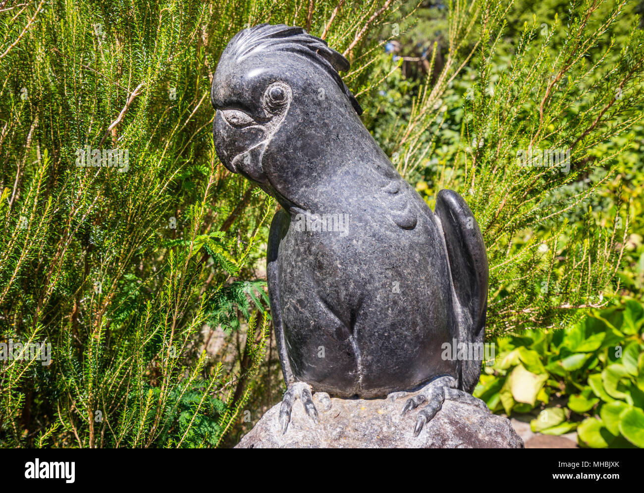 cockatoo sculpture at Blue Mountains Botanic Garden, Mount Tomah, the 128 hectare public garden, 1000 m above sea level specializes in cool-climate pl - Stock Image