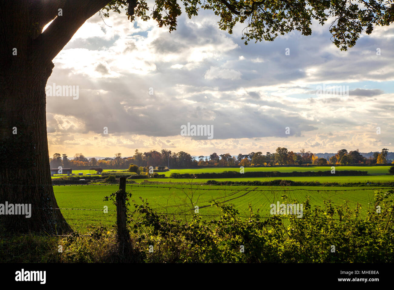 Beyond a barbed-wire fence lies a vibrant English field on a stormy day - Stock Image