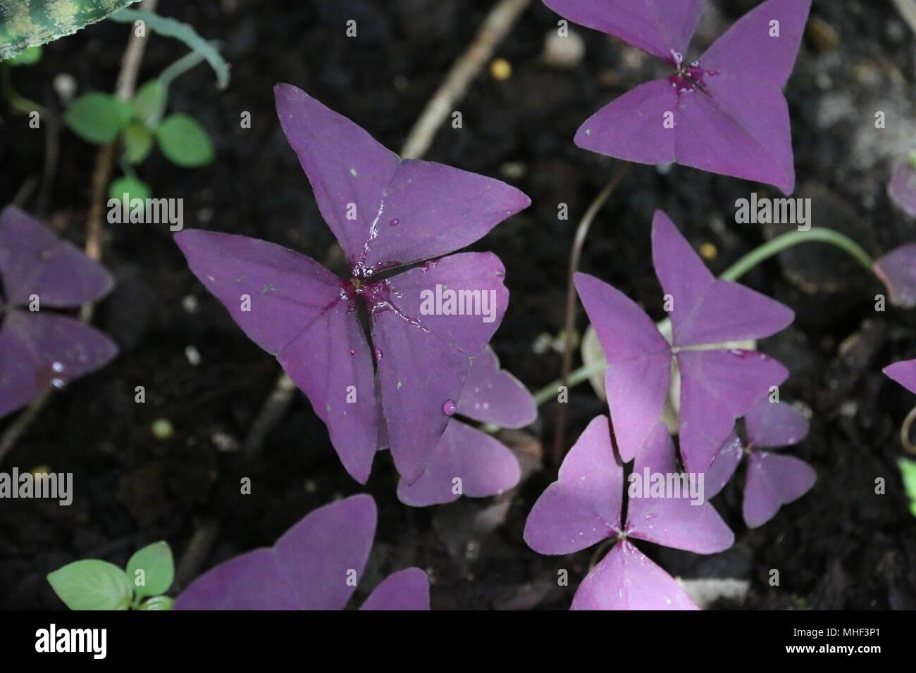 Beautiful Purple Unique Tropical Flowers Stock Photo 182885081 Alamy