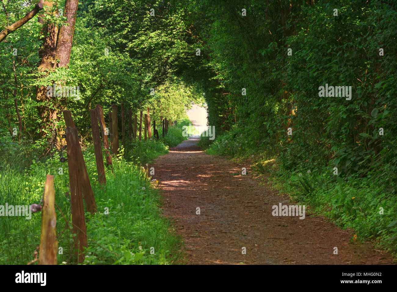 Defile, narrow trail through the forest in the town of Heiligenhaus towards' Abtskuecher pond. - Stock Image