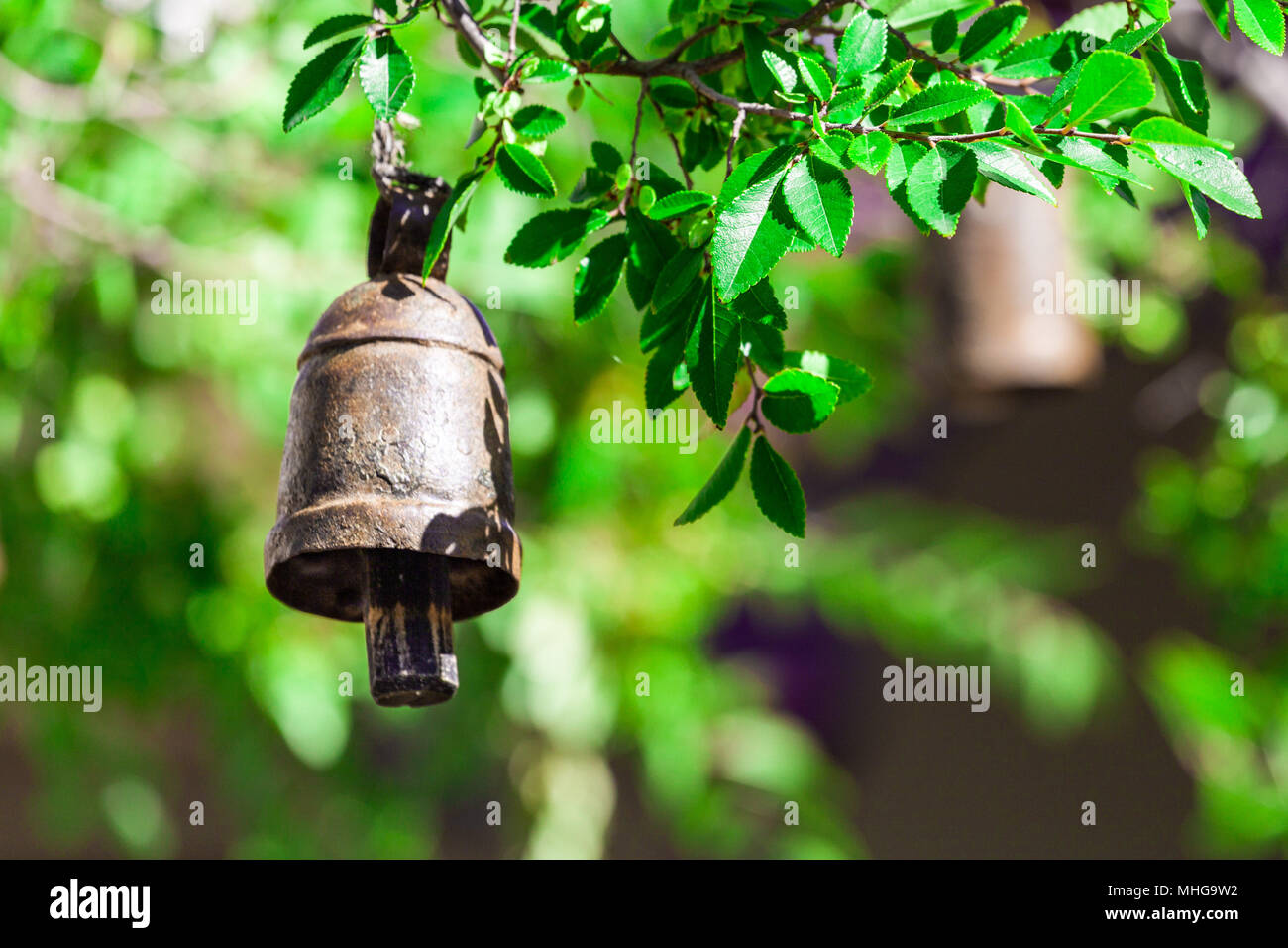 Ritual bell hanging from tree branch on blurred background - Stock Image