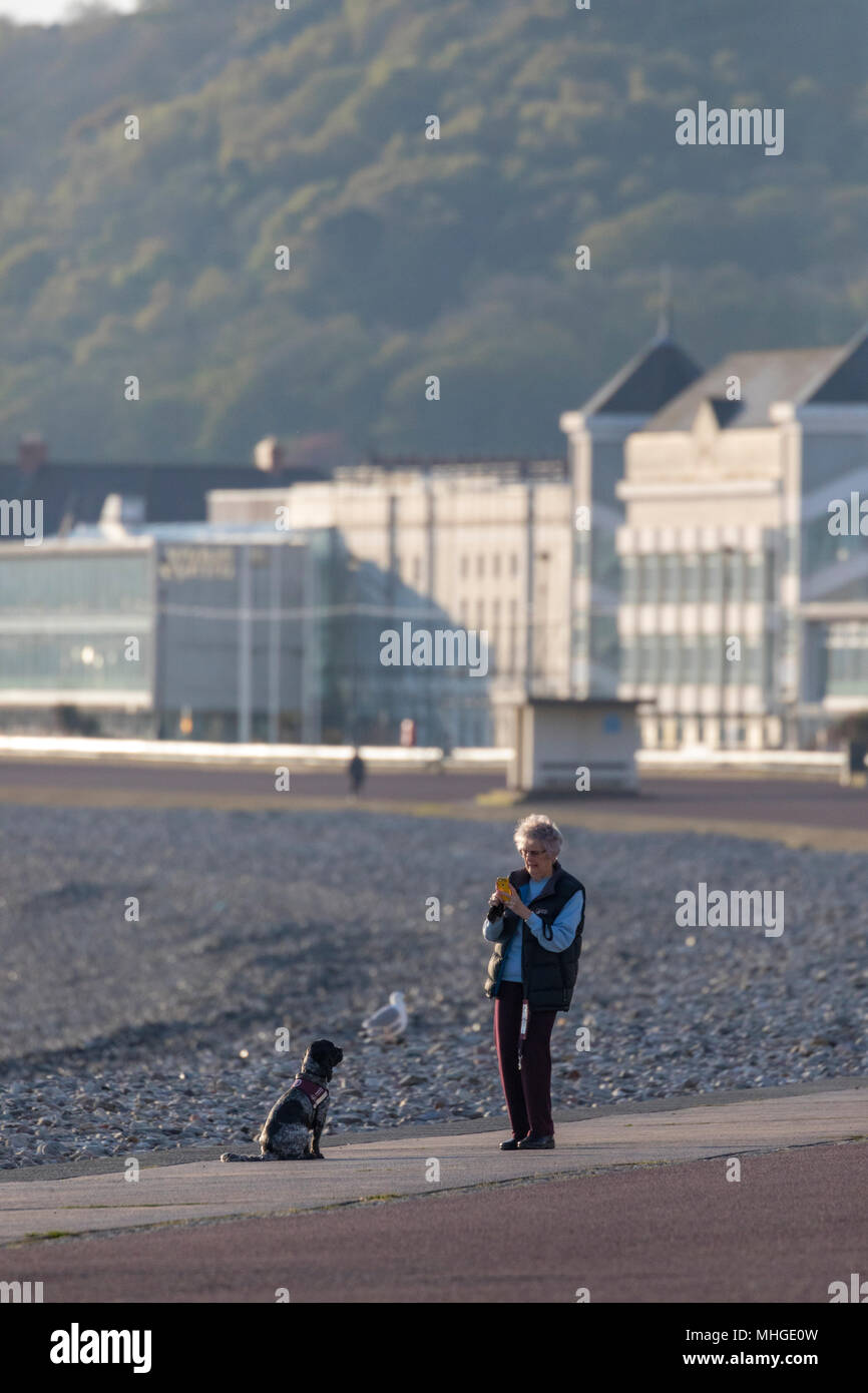 A woman pausing on a walk along the coastal promenade at Llandudno to take a picture of her pet dog with the many hotels, guest houses and B&B's - Stock Image