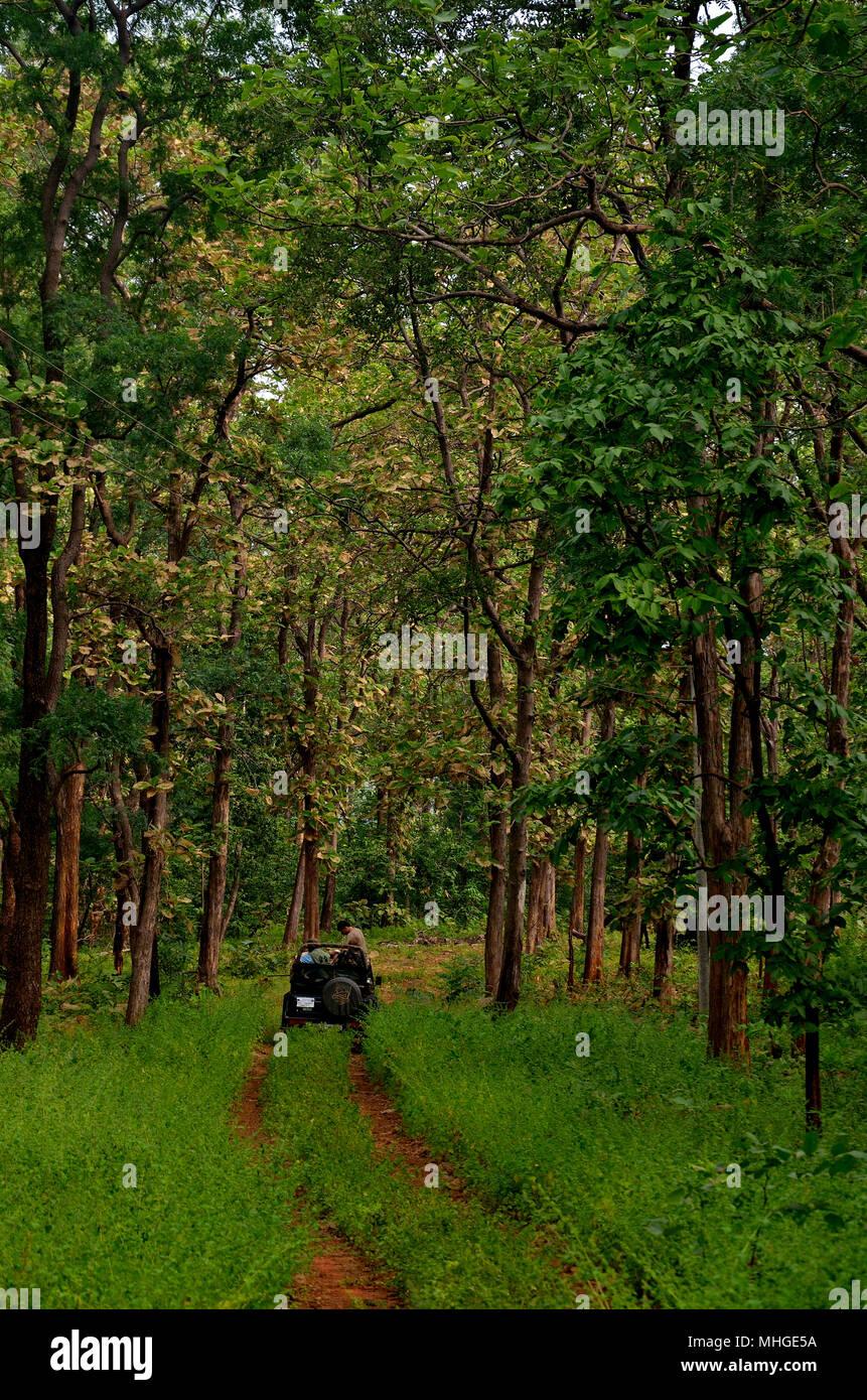 Safari vehicle in Tadoba-andhari tiger reserve Stock Photo