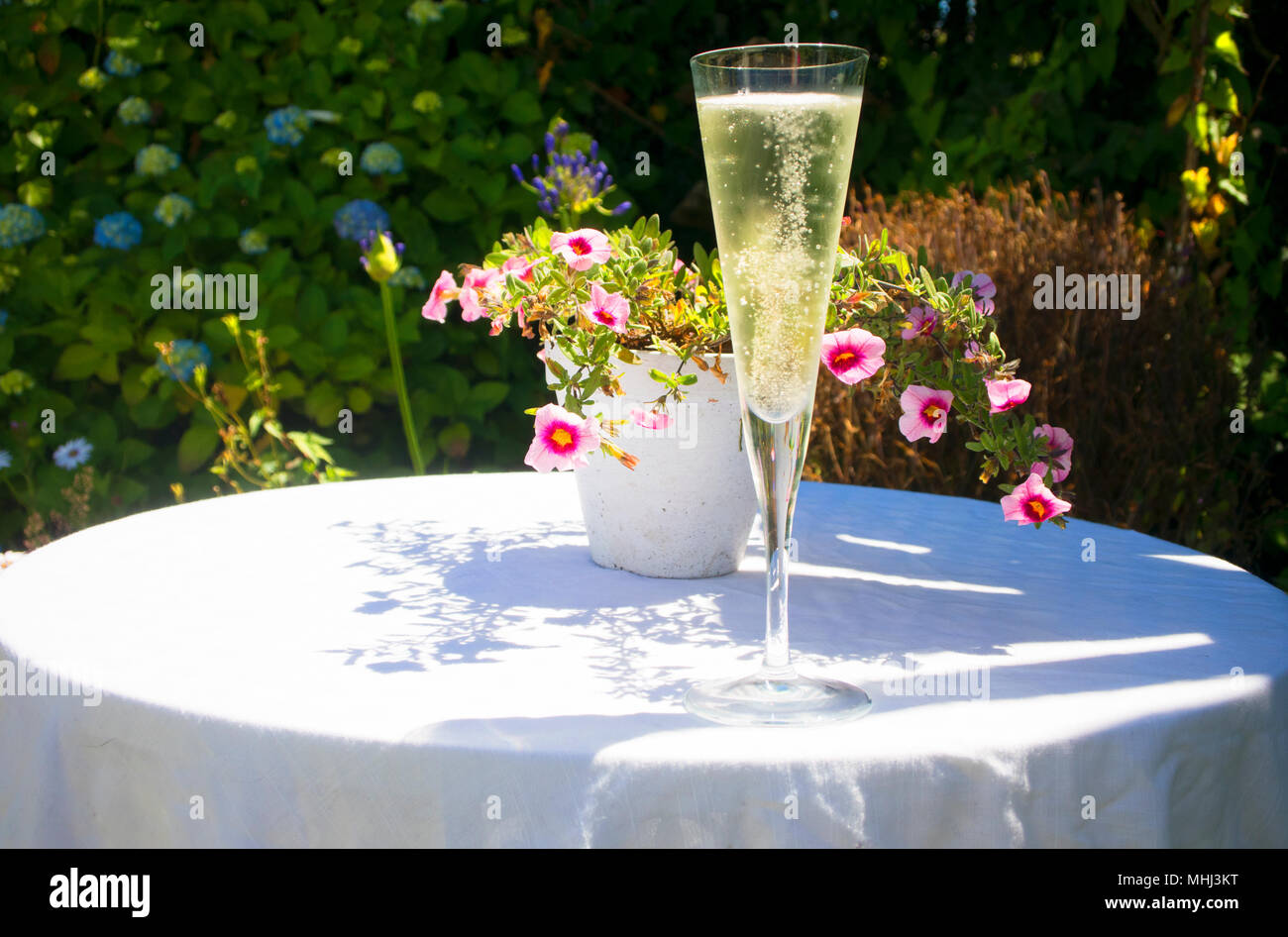 A glass of sparkling wine in a summer garden - John Gollop - Stock Image