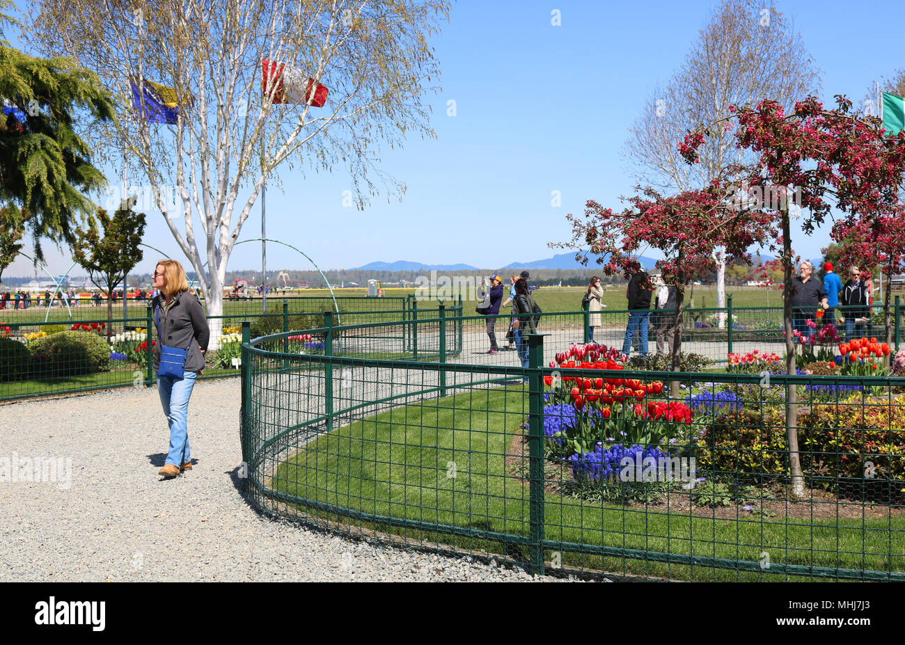 International Peace Garden at Tulip Town during the Skagit Valley Tulip Festival.  Tourists are walking through the garden. Stock Photo